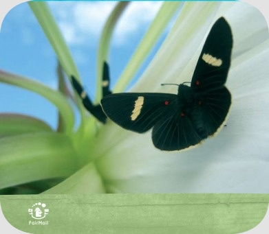 Fair Trade Photo Greeting Card Activity, Animals, Artistique, Black, Blue, Butterfly, Colour image, Condolence/Sympathy, Flower, Flying, Freedom, Horizontal, Insect, Nature, Peru, Plant, Sky, South America, Summer