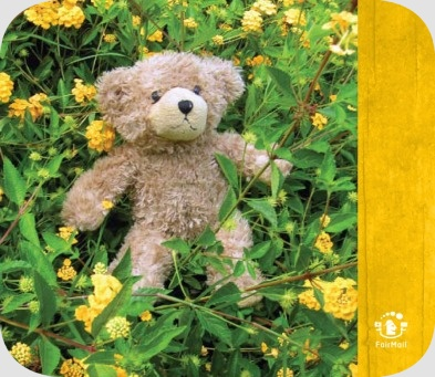 Fair Trade Photo Greeting Card Animals, Baby, Bear, Birth, Birthday, Caring, Colour image, Cute, Day, Flower, Friendship, Funny, Garden, Green, Nature, Outdoor, Peru, Seasons, South America, Summer, Teddybear, Vertical, Yellow, Youth