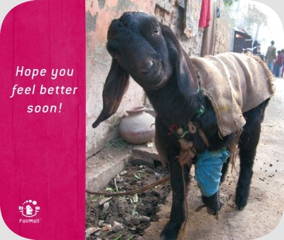 Fair Trade Photo Greeting Card Activity, Animals, Asia, Colour image, Cute, Day, Funny, Get well soon, Goat, Handicapped, India, Looking at camera, Outdoor, Sickness, Street, Streetlife, Vertical
