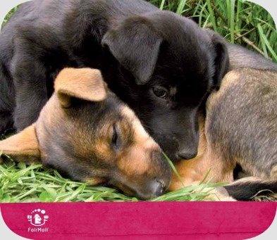 Fair Trade Photo Greeting Card Animals, Caring, Cute, Dog, Relax, Together