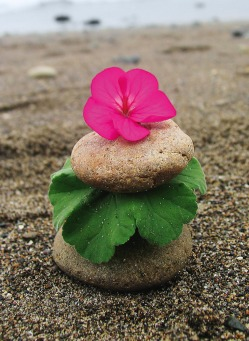 Fair Trade Photo Greeting Card Balance, Beach, Colour image, Condolence/Sympathy, Day, Flower, Green, Horizontal, Leaf, Nature, Outdoor, Peru, Pink, Sand, Sea, Seasons, South America, Spirituality, Stone, Summer, Thinking of you, Wellness