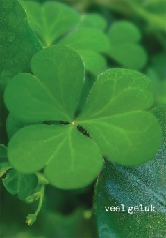 Fair Trade Photo Greeting Card Clover, Colour image, Day, Forest, Good luck, Green, Horizontal, Leaf, Nature, Outdoor, Peru, Plant, South America, Trefoil