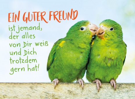 Fair Trade Photo Greeting Card Animals, Birds, Colour image, Cute, Friendship, Funny, Green, Horizontal, Love, Parrot, Peru, South America, Together