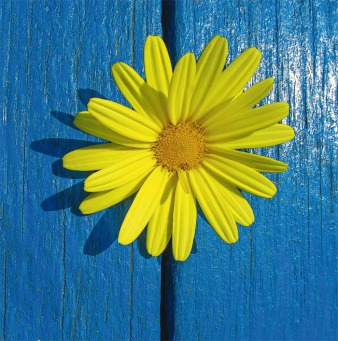 Fair Trade Photo Greeting Card Blue, Closeup, Flower, Horizontal, Peru, South America, Yellow
