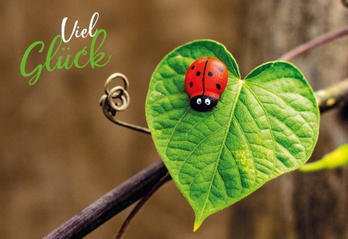 Fair Trade Photo Greeting Card Colour image, Good luck, Green, Horizontal, Ladybug, Leaf, Peru, Red, South America