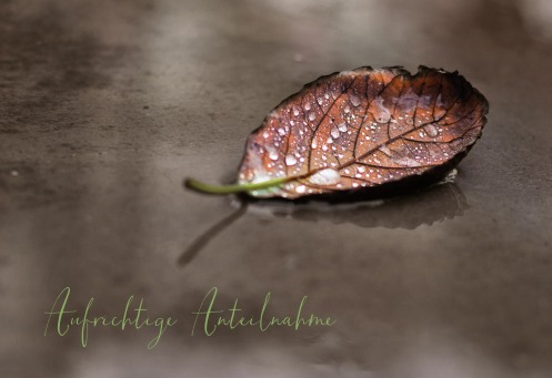 Fair Trade Photo Greeting Card Autumn, Closeup, Colour image, Condolence/Sympathy, Day, Emotions, Horizontal, Leaf, Outdoor, Peru, Sadness, Seasons, Shooting style, South America, Water, Waterdrop