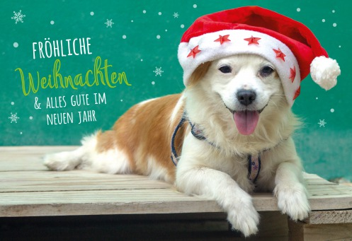 Fair Trade Photo Greeting Card Animals, Christmas, Colour image, Dog, Hat, Horizontal, Peru, South America, Star