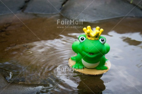 Fair Trade Photo Animals, Colour image, Cute, Dreaming, Frog, Funny, Love, Peru, River, Smile, South America, Valentines day, Vertical, Water