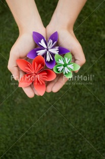 Fair Trade Photo Colour image, Condolence/Sympathy, Flower, Friendship, Mothers day, Peru, South America, Vertical