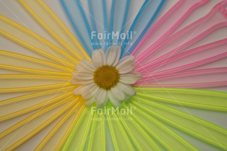 Fair Trade Photo Colour image, Colourful, Daisy, Flower, Friendship, Horizontal, Mothers day, Peru, South America