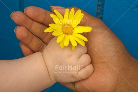 Fair Trade Photo Baby, Blue, Colour image, Flower, Gift, Hand, Hands, Horizontal, Mother, Mothers day, New baby, People, Peru, South America, Yellow