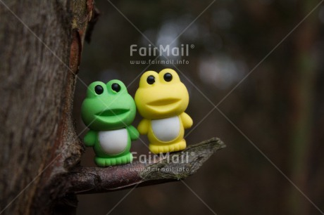Fair Trade Photo Colour image, Friendship, Frog, Horizontal, Peru, South America, Together, Tree