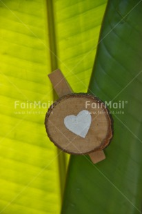 Fair Trade Photo Colour image, Green, Heart, Leaf, Love, Peru, Plant, South America, Valentines day, Vertical, White, Wood