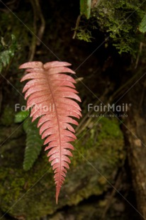 Fair Trade Photo Colour image, Forest, Leaf, Nature, Peru, South America, Vertical