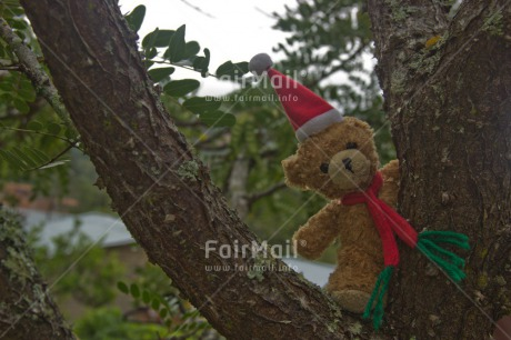 Fair Trade Photo Christmas, Colour image, Cute, Hat, Horizontal, Peru, South America, Teddybear