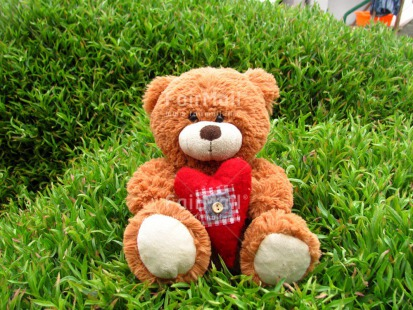 Fair Trade Photo Colour image, Grass, Heart, Horizontal, Love, Mothers day, Outdoor, Peru, Red, South America, Summer, Teddybear, Valentines day