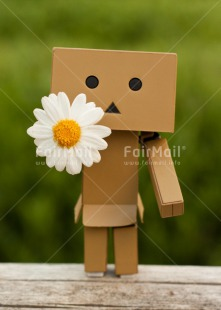 Fair Trade Photo Closeup, Colour image, Daisy, Danboard, Flower, Friendship, Love, Peru, Shooting style, Sorry, South America, Valentines day, Vertical