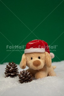 Fair Trade Photo Animals, Christmas, Colour image, Dog, Hat, Peru, Puppy, Snow, South America, Vertical