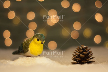 Fair Trade Photo Animals, Bird, Christmas, Colour image, Horizontal, Light, Peru, Seasons, Snow, South America, Winter