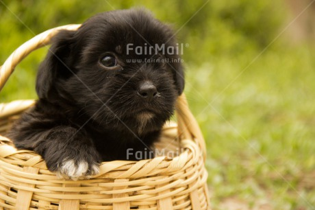 Fair Trade Photo Animals, Colour image, Cute, Dog, Friendship, Horizontal, Mothers day, Peru, Puppy, South America, Thank you, Valentines day