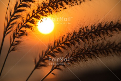 Fair Trade Photo Colour image, Condolence/Sympathy, Horizontal, Peru, South America, Sunset, Wheat
