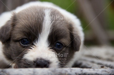 Fair Trade Photo Activity, Animals, Colour image, Cute, Dog, Horizontal, Peru, Puppy, Relaxing, South America