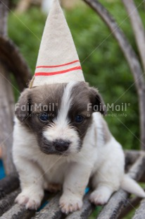 Fair Trade Photo Animals, Birthday, Colour image, Dog, Peru, Puppy, South America, Vertical