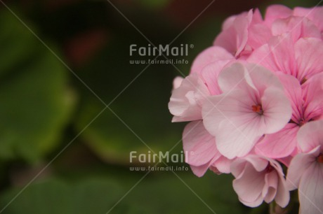 Fair Trade Photo Colour image, Condolence/Sympathy, Flower, Horizontal, Mothers day, Peru, South America