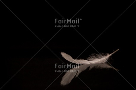 Fair Trade Photo Black, Black and white, Colour image, Condolence/Sympathy, Feather, Horizontal, Peru, Shooting style, Silence, Sorry, South America, White