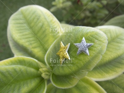 Fair Trade Photo Christmas, Colour image, Focus on foreground, Green, Horizontal, Nature, Outdoor, Peru, Plant, South America, Star, Tabletop