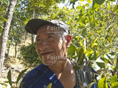 Fair Trade Photo Activity, Agriculture, Casual clothing, Clothing, Coffee, Colour image, Day, Farmer, Food and alimentation, Green, Horizontal, Looking away, One man, Outdoor, People, Peru, Portrait headshot, Rural, Smiling, South America, Tree