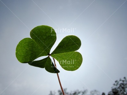 Fair Trade Photo Blue, Clover, Condolence/Sympathy, Day, Good luck, Green, Heart, Horizontal, Leaf, Light, Love, Outdoor, Peru, Sky, South America, Spirituality, Summer, Thinking of you, Trefoil
