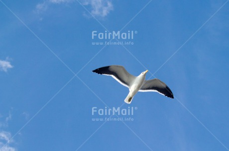 Fair Trade Photo Activity, Animals, Bird, Blue, Colour image, Flying, Freedom, Peru, Seagull, Sky, South America, Summer