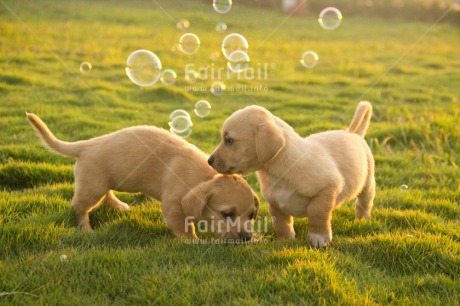 Fair Trade Photo Animals, Colour image, Cute, Day, Dog, Friendship, Horizontal, Outdoor, Peru, Puppy, Soapbubble, South America, Summer, Together