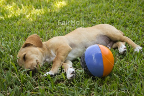 Fair Trade Photo Activity, Animals, Ball, Colour image, Dog, Grass, Horizontal, Peru, Playing, Puppy, South America