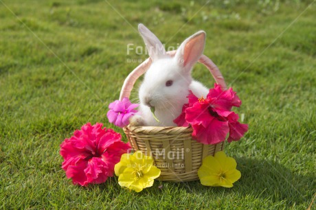 Fair Trade Photo Animals, Colour image, Cute, Easter, Flower, Horizontal, Outdoor, Peru, Rabbit, Seasons, South America, Spring