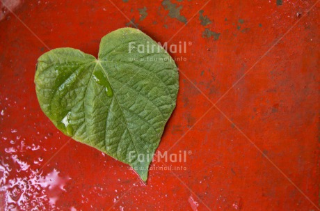 Fair Trade Photo Closeup, Colour image, Green, Heart, Horizontal, Leaf, Love, Mothers day, Peru, Red, South America, Valentines day