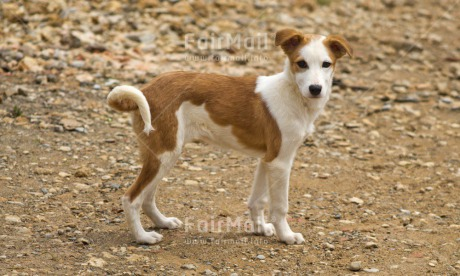 Fair Trade Photo Activity, Animals, Colour image, Dog, Horizontal, Looking at camera, Peru, South America