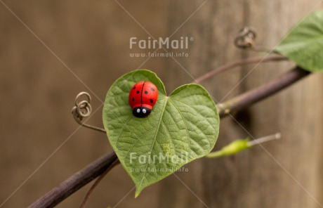 Fair Trade Photo Colour image, Good luck, Green, Horizontal, Ladybug, Leaf, Peru, Red, South America