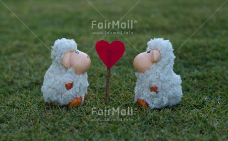 Fair Trade Photo Animals, Colour image, Grass, Green, Heart, Horizontal, Love, Marriage, Peru, Red, Sheep, South America, Valentines day, Wedding