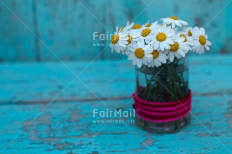 Fair Trade Photo Daisy, Flower