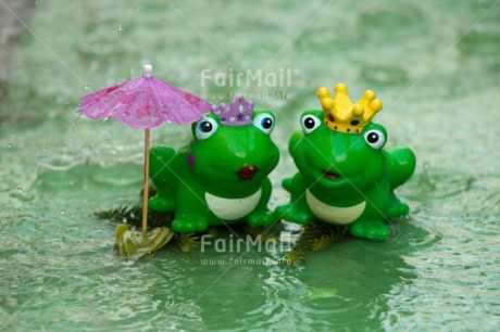 Fair Trade Photo Animals, Frog, Funny, Love, Marriage, Prince, Princess, Rain, Together, Umbrella, Water, Wedding