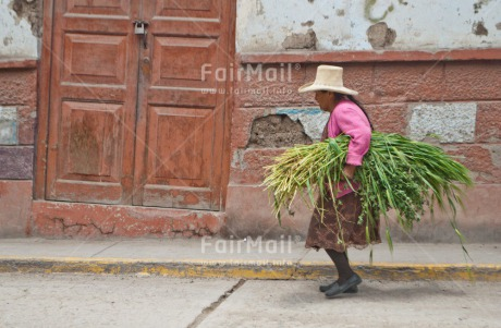 Fair Trade Photo Activity, Agriculture, Carrying, Colour image, Horizontal, One woman, People, Peru, Rural, Sombrero, South America, Walking