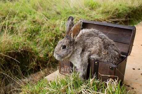 Fair Trade Photo Activity, Animals, Box, Colour image, Easter, Horizontal, Jumping, Outdoor, Peru, Rabbit, Rural, South America