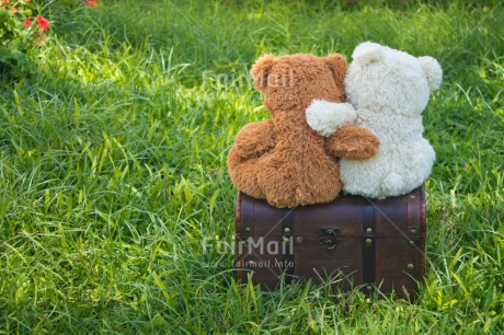 Fair Trade Photo Activity, Animals, Bear, Brother, Colour image, Friendship, Garden, Grass, Green, Holiday, Horizontal, Hug, Love, New home, Outdoor, Peru, Seasons, Sister, Sitting, South America, Summer, Travel, Travelling