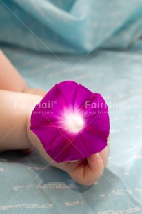 Fair Trade Photo 0-5_years, Activity, Baby, Birth, Caucasian, Colour image, Flower, Hands, Holding, New baby, People, Peru, Purple, Sleeping, South America, Vertical