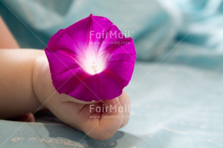 Fair Trade Photo 0-5_years, Activity, Baby, Birth, Caucasian, Colour image, Flower, Hands, Holding, Horizontal, New baby, People, Peru, Purple, Sleeping, South America
