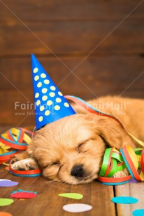 Fair Trade Photo Activity, Animals, Birthday, Celebrating, Clothing, Colour image, Colourful, Confetti, Cute, Dog, Hat, Lying, Multi-coloured, New Year, Peru, Puppy, Sleeping, Sorry, South America, Vertical