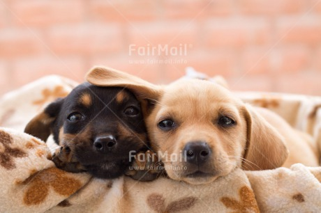 Fair Trade Photo Animals, Black, Colour image, Couple, Cute, Dog, Friendship, Horizontal, Love, Peru, Puppy, Sorry, South America, Thank you, Thinking of you, Two