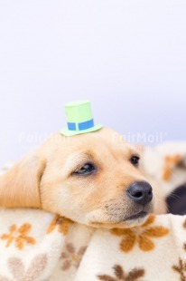Fair Trade Photo Activity, Animals, Birthday, Celebrating, Clothing, Colour image, Colourful, Cute, Dog, Emotions, Hat, Loneliness, Paper, Peru, Puppy, Sadness, Sorry, South America, Thinking of you, Vertical